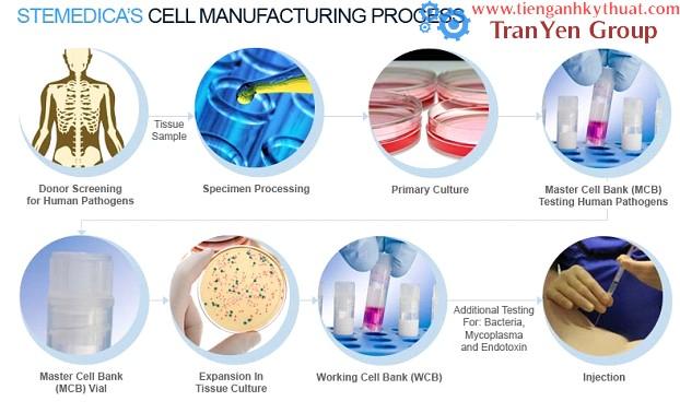 Quá trình sản xuất tế bào gốc cho người