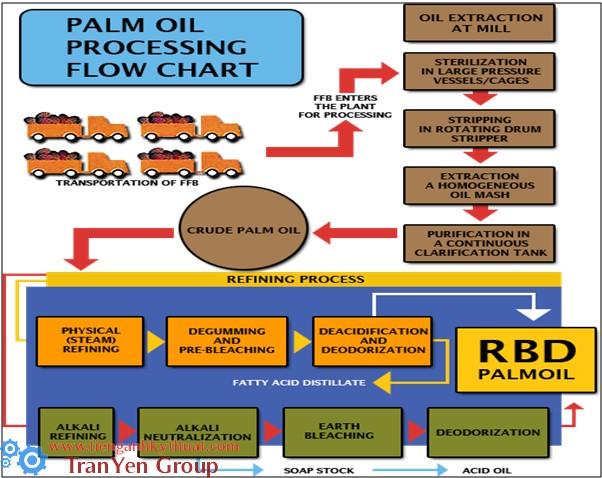 Quy trình sản xuất dầu cọ